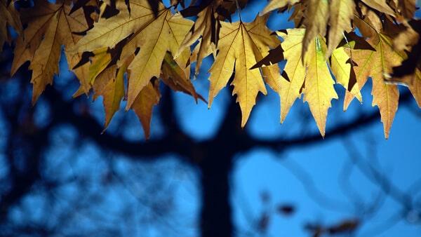 Autumn's Theme Color: Golden Yellow