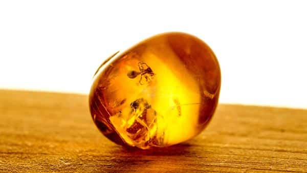 Orange Amber Gemstone With an Insect Inside